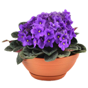 盆栽植物安卓版