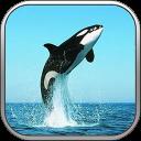 我的世界海洋公园VR安卓版(apk)
