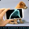 Xray Animals Prank